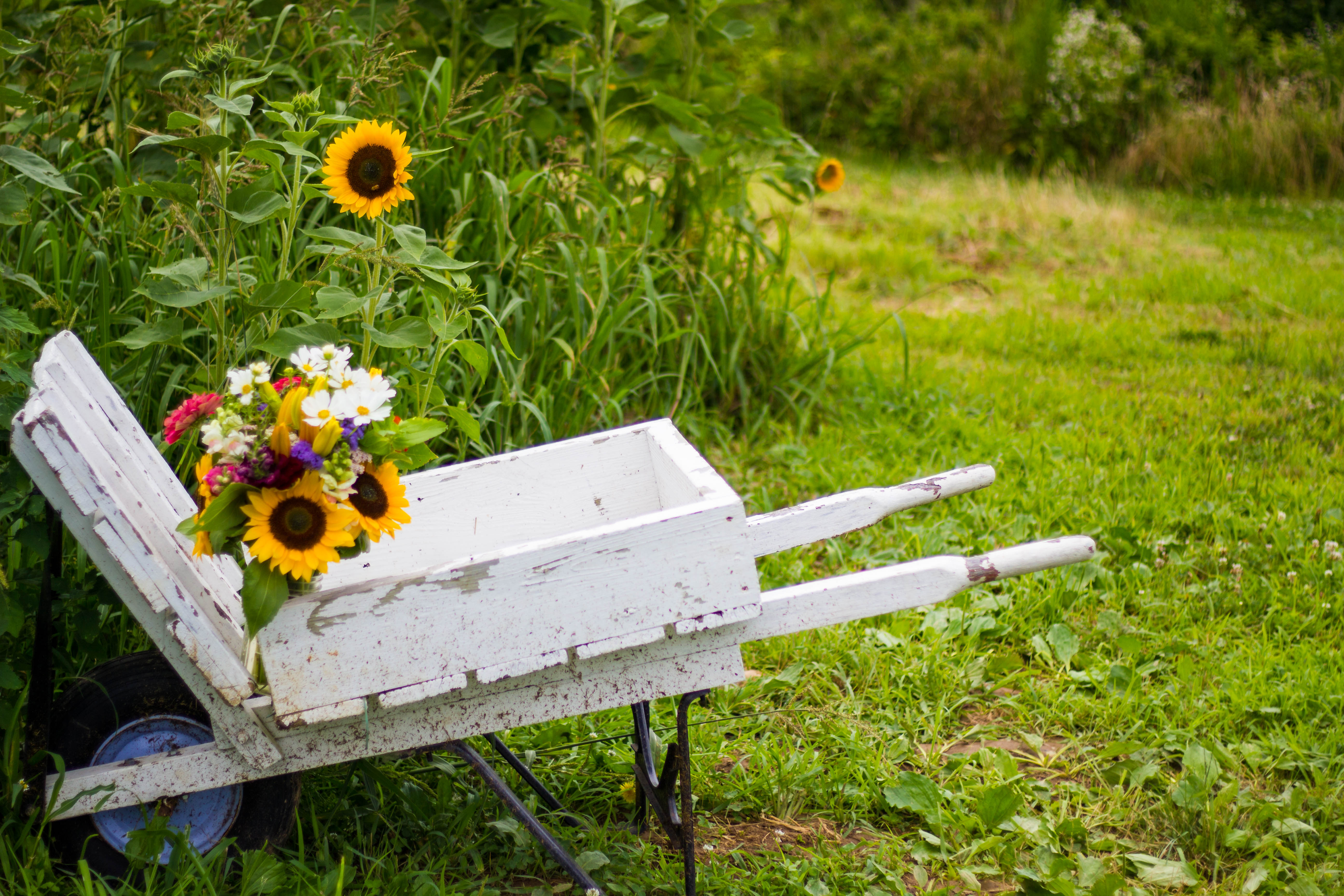 Bouquet of flowers in a wheelbarrow