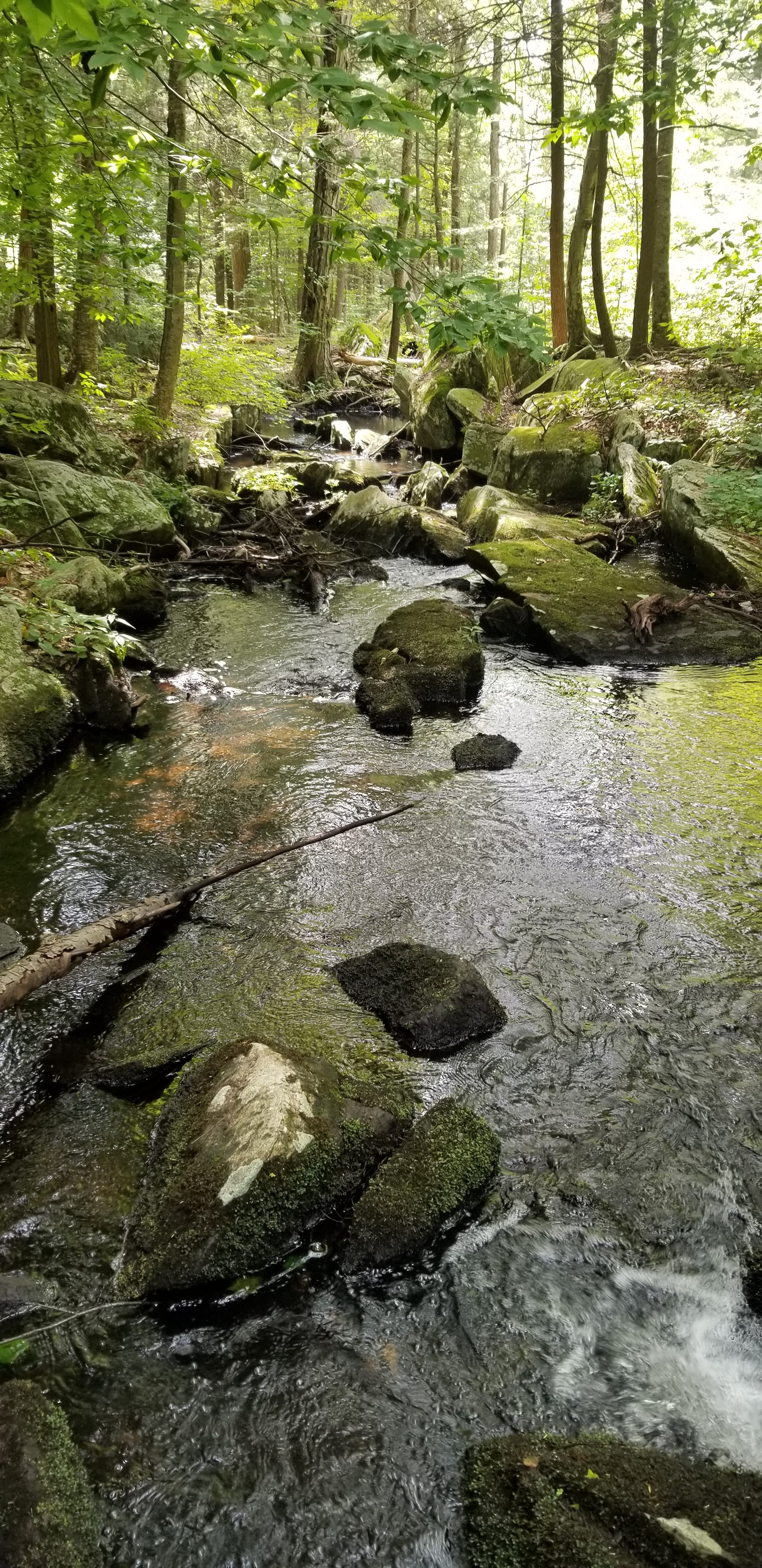 One of the streams in the Three Lakes trail