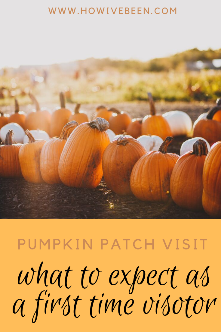 what to expect at a pumpkin patch pinterest