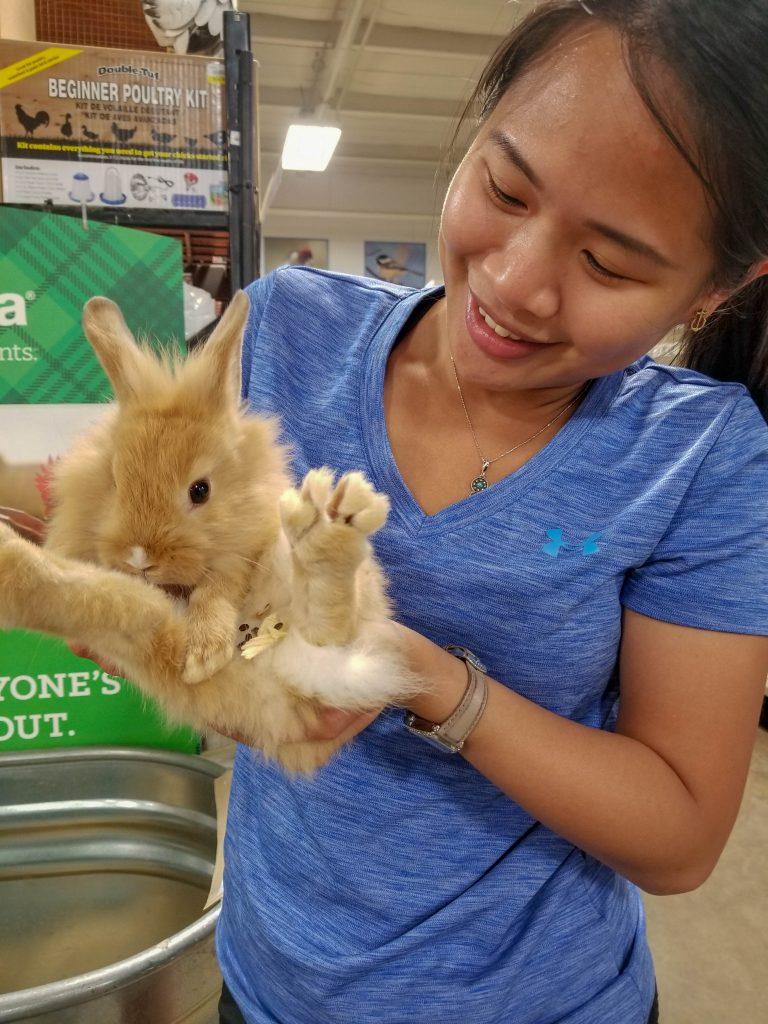 bunny in woodward 2019